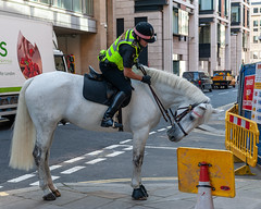 Reading the signs (jeremyhughes) Tags: london street horse police policehorse equine sign signs anthropomorphism nikon d700 nikkor city people cityoflondon 2470mmf28d urban partnership partners greyhorse grey