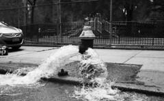 Navy Street (neilsonabeel) Tags: nikonfm2 nikon nikkor film analogue blackandwhite hydrant firehydrant water brooklyn newyorkcity street