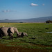 Elephants grazing in Amboseli swamps