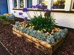Floral bed (BrooksieC) Tags: flowers flowerbed