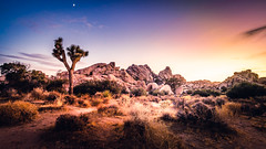 Joshua Tree at Dusk (DC Tink) Tags: california excursion hot landscape mostlysunny nationalpark summer yuccatree yuccavalley desert highdesert nature outdoors groveland unitedstates
