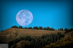 Moon Set Over Wyoming (Wycpl) Tags: fullmoon wyoming moonset jcpphotography trees horizon sagebrush mountains
