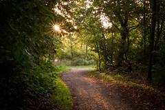 Morning walk (Gret B.) Tags: morningwalk morgen morgens morning früh morgenspaziergang sonne sun sonnenaufgang wald waldweg bäume