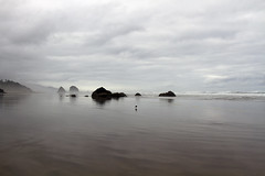 there is a rapture on the lonely shore (1crzqbn) Tags: seascape bird sliderssunday beach coast ocean mist outside light