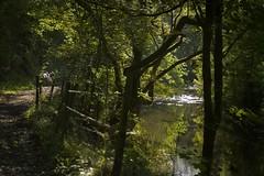 RiversideWalk (Tony Tooth) Tags: nikon d7100 sigma 70mm river track footpath rivermanifold shady sunlit countryside swainsley staffs staffordshire