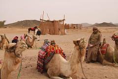 Nomads-oasis desert, Hurghada, Egypt (cattan2011) Tags: egypt hurghada nomadsoasisdesert tradition exploringtheegypt travel landscape desert egyptian travelphotography landscapephotography travelphoto egyptianculture travelbloggers traveltuesday architecture architecturephotography camels