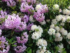 Mixture (BrooksieC) Tags: nature countryside flowers belfast northernireland dunmurry ireland