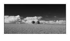 two trees (ASTPic) Tags: astpic doppelbaum twotrees ir bw noiretblanc xpro1 artseries