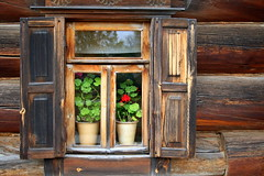 Travelling to Suzdal (galahad1969) Tags: russia travel travels trip trips tourism tour tours town towns windows window flowers flower suzdal house