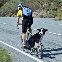 Taken for a Ride (Elmer Duck) Tags: nikonv1 dog humour skye cyclist cycling