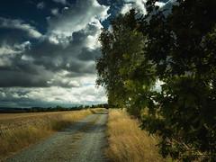 Summer Landscapes (I) (Maximilian Busl) Tags: trees summer sky green nature clouds mediumformat landscape bayern deutschland outdoor hasselblad 500cm digitalback töpen cfv50c