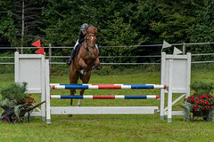 A7306089_s (AndiP66) Tags: kva pferdesporttage mettmenstetten kavallerieverein bezirk affoltern reitanlage grüthau 14september2019 september 2019 springen pferd horse schweiz switzerland kantonzürich cantonzurich concours wettbewerb horsejumping equestrian sports springreiten pferdespringen pferdesport sport sony sonyalpha 7markiii 7iii 7m3 a7iii alpha ilce7m3 sonyfe70300mmf4556goss fe70300mm 70300mm f4556 emount andreaspeters