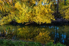 Beautiful reflection shot of the Provo River along the Provo River Parkway trail by Utah Lake. (wesleygilson97) Tags: tamron18400mm tamron nikond7500 nikon naturephotography fallcolors provoriver reflections landscapephotography