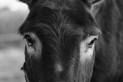 19SR5827_LR (richard_friedrich) Tags: nature donkey