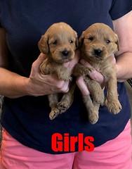 Kasey Girls 9-14