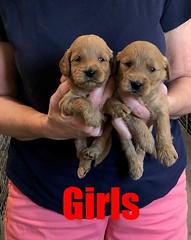 Kasey Girls pic 3 9-14