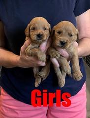 Kasey Girls pic 4 9-14