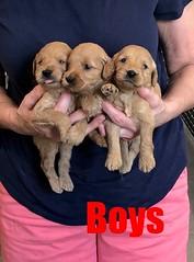 Kasey Boys pic 4 9-14