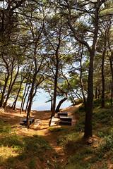 Picnic area in Mljet National Park, Croatia