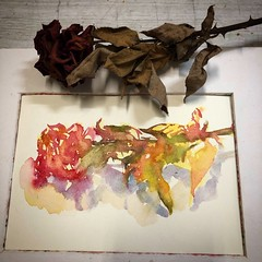 Day 1499 The #rose  #painting for today. #watercolour #watercolourakolamble #sketching #stilllife #flower #art #fabrianoartistico #hotpress #paper #dailyproject (akolamble) Tags: rose painting watercolour watercolourakolamble sketching stilllife flower art fabrianoartistico hotpress paper dailyproject