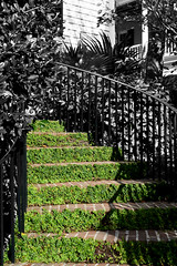Ivy Covered Stone Steps (Christie Anne K) Tags: architecture outdoors home beauty green stairs charleston