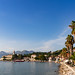 Palm trees on the western coast of Lopud island, Croatia