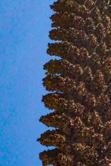 Puya raimondii. (Antonio Chávez S.S.) Tags: pastoruri pastoruriglacier parquenacionalhuascarán cordillerablanca ancash perú glacier icecap snowpeak snowmountain landscape nature mountain mountains andes andesperuanos cordilleradelosandes glacierretreat glacialmelting icemelting globalwarming climatechange outdoor travel tour