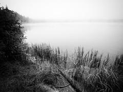 Lac de Servières (steph20_2) Tags: panasonic gh4 m43 lac lake eau monochrome monochrom montagne brouillard brume frog auvergne puydedôme france noir noiretblanc ngc blanc black bw white skanchelli
