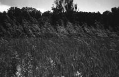 Retro400_001009 (Eric Hartke) Tags: contaxii sonnar5015t rolleiretro400s hc110 blackandwhite filmisnotdead