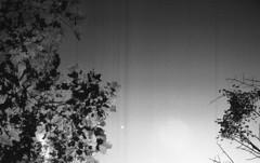 Retro400_001008 (Eric Hartke) Tags: contaxii sonnar5015t rolleiretro400s hc110 blackandwhite filmisnotdead