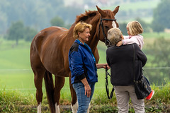 A7306222_s (AndiP66) Tags: kva pferdesporttage mettmenstetten kavallerieverein bezirk affoltern reitanlage grüthau 14september2019 september 2019 springen pferd horse schweiz switzerland kantonzürich cantonzurich concours wettbewerb horsejumping equestrian sports springreiten pferdespringen pferdesport sport sony sonyalpha 7markiii 7iii 7m3 a7iii alpha ilce7m3 sonyfe70300mmf4556goss fe70300mm 70300mm f4556 emount andreaspeters