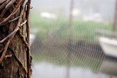 early morning mist at the harbor (evablanchardcouet) Tags: spiderweb wood toile mist boats macro