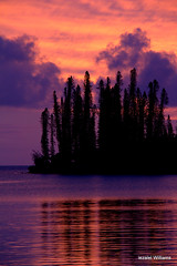 Pine trees and reflection at sunset IMG_0141 (iezalel7williams) Tags: sunset reflection photo pinetrees photography nature water seawater sea sky silhouettes seascape scenary naturalplace vibration high happylife pink purple paradise pacific newcaledonia beautiful isleofpines beauty clouds canoneos700d thinkpositive light love landscape land lovely orange outdoor travel thankyou
