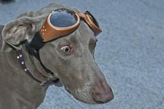 doggles (ruthinea) Tags: doggles juno sunglasses