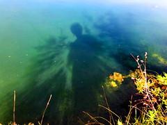Late summer: Fly fishing on Bluebird Estates (+1) (peggyhr) Tags: peggyhr lake shadows shrubs blue green gold orange latesummer img5758a bluebirdestates alberta canada rod flyfishing infinitexposurel1 visionaryartsgallerylevel1