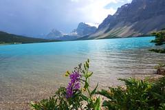 Vẻ đẹp của Rocky Mountain ở Calgary ( Canada ) (quynhchi19102016) Tags: ve may bay gia re di calgary