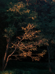 SCAN_1_4 (A_V_P) Tags: pentax 67 smc provia 300 ed landscape tree forest autumn medium format film selfdeveloped selfscaned