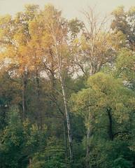 SCAN_1_1 (A_V_P) Tags: pentax 67 smc provia 300 ed landscape tree forest autumn medium format film selfdeveloped selfscaned