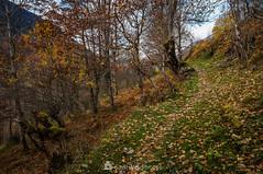 Camí deth Pradet (SantiMB.Photos) Tags: 2blog 2tumblr 2ig valdetoran valldaran valdaran pirineos pyrenees lleida otoño autumn camino way path sendero geo:lat=4281869300 geo:lon=081111086 geotagged santjoandetoran cataluna españa
