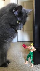 Even superheroes need hugs (Mystifierman) Tags: cat iron fist ironfist