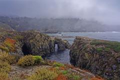 California Coastline | ACT8789 (TariqhCN) Tags: fog california coastline pacific ocean cave tunnel cove water plant succulents cypress trees landscape nature outdorrs trail fall cliffs new