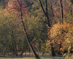 SCAN_1_8 (A_V_P) Tags: pentax 67 smc provia 300 ed landscape tree forest autumn medium format film selfdeveloped selfscaned
