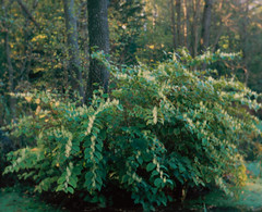 SCAN_1_9 (A_V_P) Tags: pentax 67 smc provia landscape tree forest autumn medium format film selfdeveloped selfscaned 120mm soft softfocus