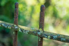 Fence #257 (Peter Jaspers) Tags: frompeterj© 2019 olympus zuiko omd em10 1240mm28 dof macro bokeh fence fenced rust hff happyfencefriday betuwe rivierenland routenl fietstocht bikingtour autumn herfst