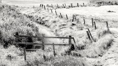 Posts (ainz1607) Tags: outside countryside miminalistic minimal essex em10 omd olympus s bend river posts bw gate highkey