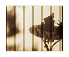 Return of Illusion (Thomas Listl) Tags: thomaslistl color nomansland av af curtain lines geometry graphical graphic shadow shadows stilllife table light sunlight indoor backlight contrast warm véranda veranda lightandshadow