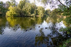 Pond (galterrashulc) Tags: kuzminkidistrict moscow russia irina galitskaya galterrashulc nature lake pond lakescape landscape tree duck autumn sunny flora fauna circle