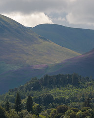 Hills of heather (Stickyemu) Tags: landscape derwentwater nature outdoor outside hill forest tree layers heather purple green lakedistrict lakeland cumbria nikond500 tamronsp70300f456vc