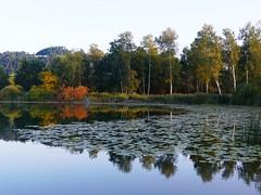 Gerzensee (Martinus VI) Tags: gerzensee lac lake lago martinus6 martinus6xy martinus martinusvi hillside herbst automne autumn autunno september kanton canton de schweiz suiza suisse switzerland svizzera swiss bern berne berna bernese berner y190916