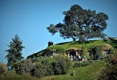 Home of Bilbo & Frodo Baggins (SM Tham) Tags: newzealand northisland matamata hobbiton lotr thehobbit smial hobbithole home house bilbobaggins frodobaggins samwisegamgeerosiecotton hill tree underground door window people tourists theshire